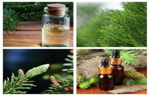 Propiedades, beneficios y usos del Aceite de Picea