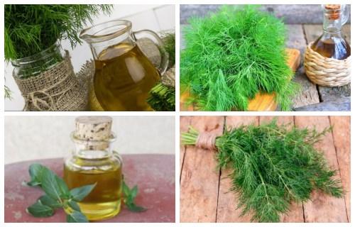 propiedades aceite de eneldo
