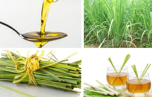 como hacer aceite de hierba limon