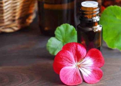 aceite esencial de geranio usos