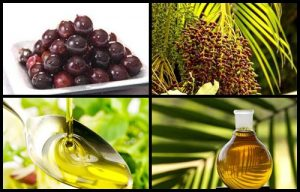 Propiedades usos y características del aceite de Seje