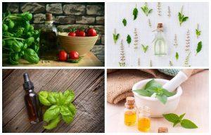 Para que sirve el aceite de albahaca, sus propiedades, y como se hace