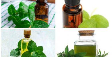 aceite esencial de hierbabuena composicion