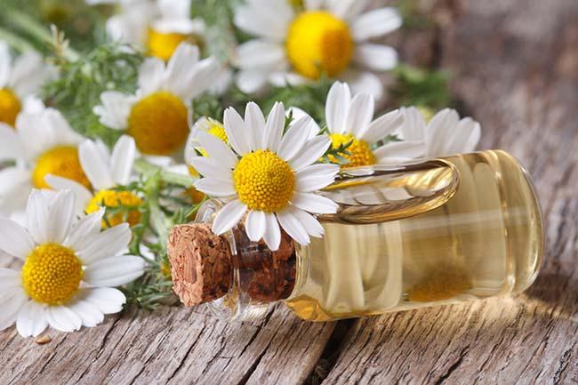 aceite esencial de manzanilla propiedades