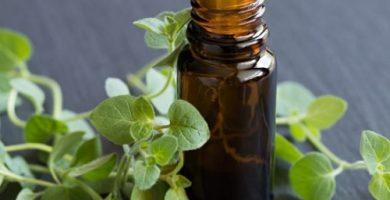beneficios del aceite de oregano