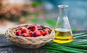 Aceite de palma, que es, beneficios y para que se usa